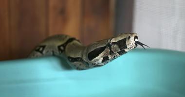 Snakes   KRLD 1080