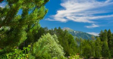 Cedar Trees, Mountains