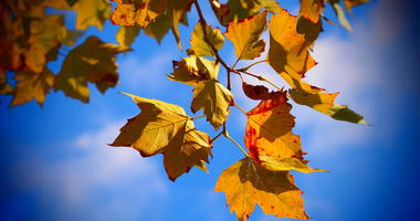 Fall, Leaves