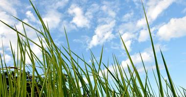 Sunshine, grass