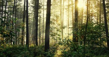 Woods, Forrest,