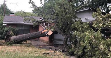 Irving Tree Damage