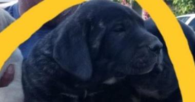 Stolen Puppy