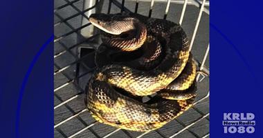 Snake in shopping cart