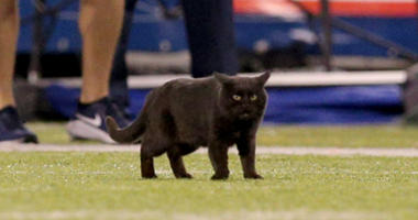 Black Cat at Cowboys vs Giants