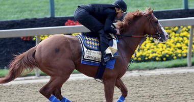 Improbable works out on the track at Pimlico before the 2019 Preakness Stakes.