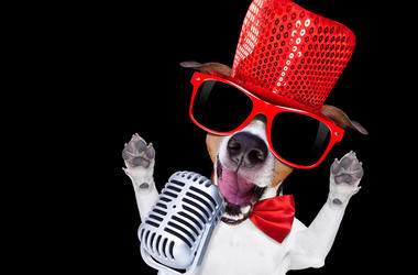 Karaoke Dog