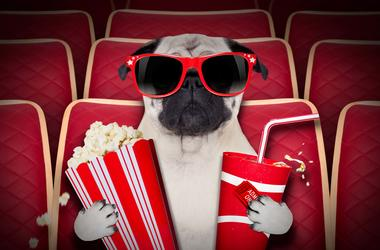 A dog watching a movie with popcorn