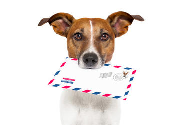 Dog with Mail