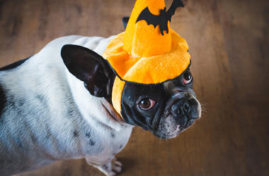 Dog In A Halloween Hat