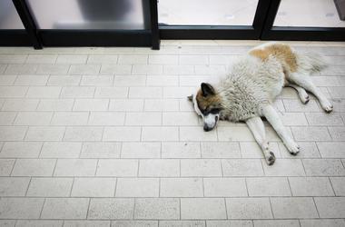 Dog, Sleeping, Convenience Store, Entrance, Stray