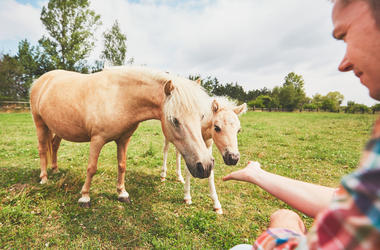 Guy Petting A Horse