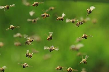Bees, Swarm, Flying, Honey Bees, Green Bukeh
