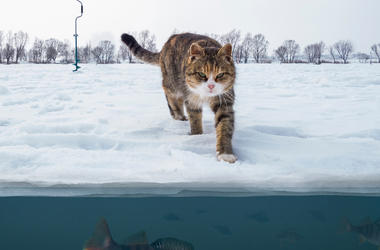 Cat, Frozen Lake, Snow, Ice, Fish