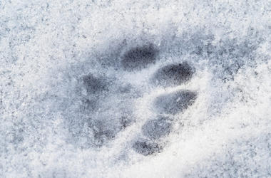 Cat, Pawprint, Snow, Frozen, Cold