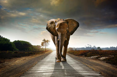 Elephant, Walking, Street, Road, Sunset