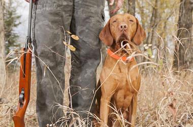 Dog, Owner, Hunting, Rifle, Pose, Good Boy