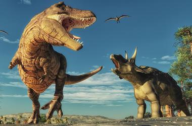 Dinosaurs, T-Rex, Triceratops