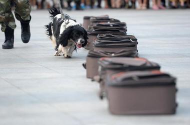 Drug-Sniffing Dog, Luggage, Demonstration, China