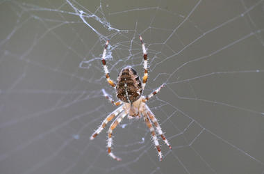 garden spider, good spider, bad spider, spider, texas, dfw, awful, terrifying