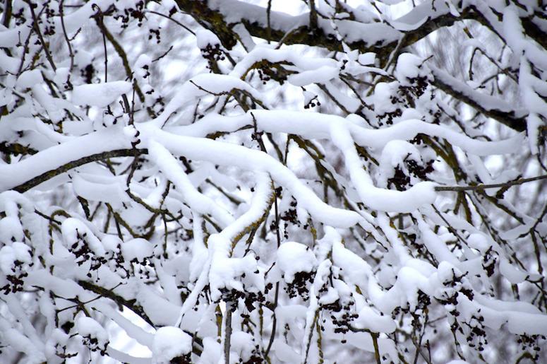 Snow, Hawaii, Trees, Island, Maui, Snowstorm