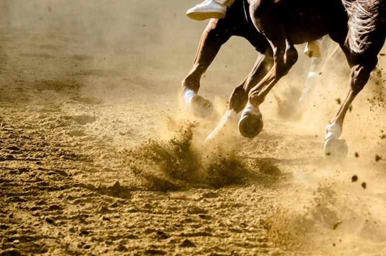 Horse, Racing, Running, Dirt Track,