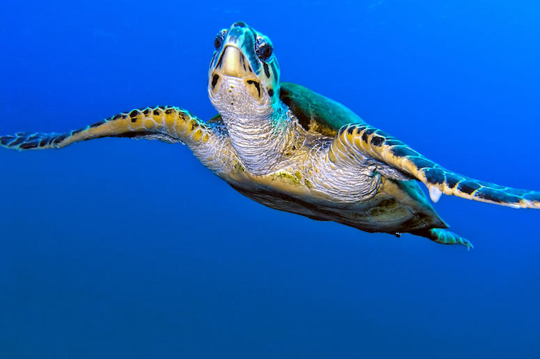 Sea Turtle, Turtle, Ocean, Swimming, Clear Water, Water