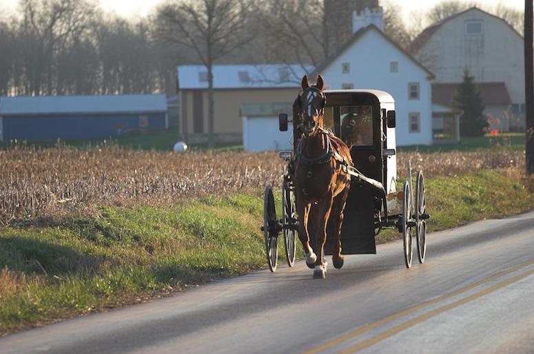 Amish, Horse, Buggy