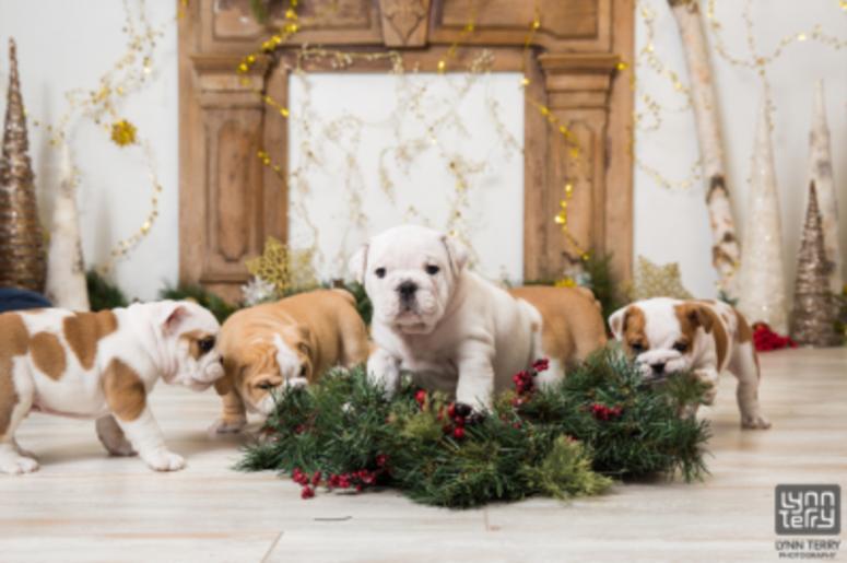 bulldogs photoshoot
