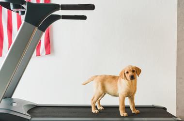 Dog on Treadmill