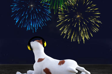 Dog and Firework