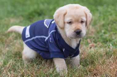 The St. Louis Blues Puppy