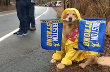 Spencer the Boston Marathon dog