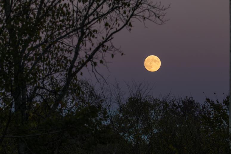 Don't Miss Tonight's Full Buck Moon! | Y98