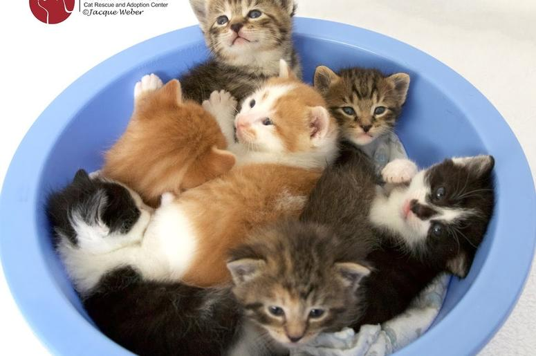 Animal House Cat Rescue and Adoption Center
