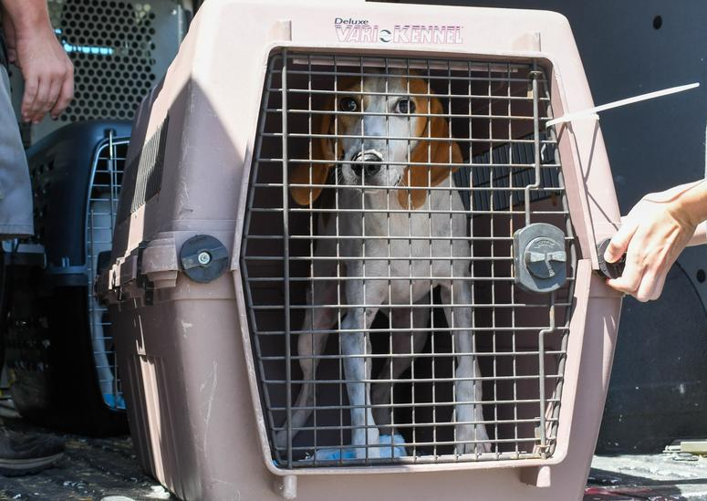 Displaced dog flees Hurricane Dorian-affected areas
