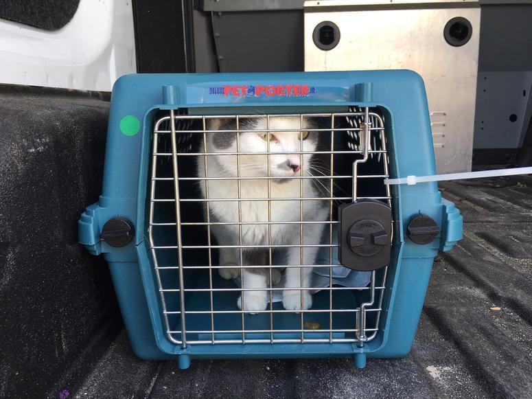 Displaced cat flees Hurricane Dorian-affected areas