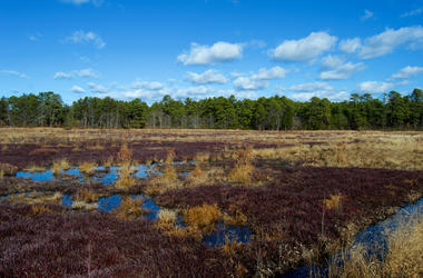 Cranberry bogs in the Pine Barrens, New Jersey