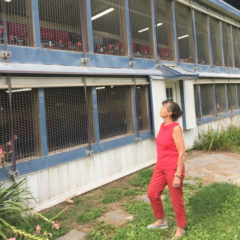 Owners of a Chester County egg farm are concerned about high temperatures and are keeping a close watch on their chickens.