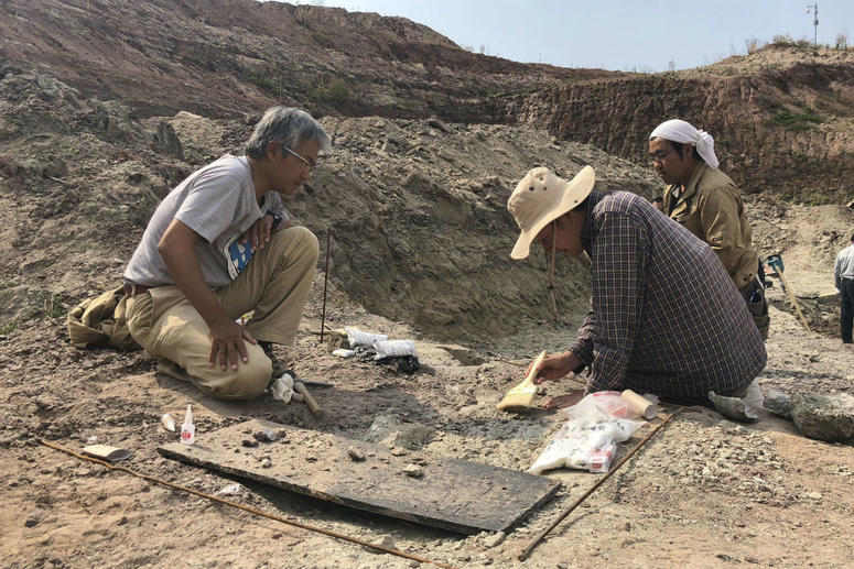 In this Sept. 13, 2018, photo, paleontologist Xu Xing brushes away sediment to examine fossils recovered from a dig site in Yanji, China.
