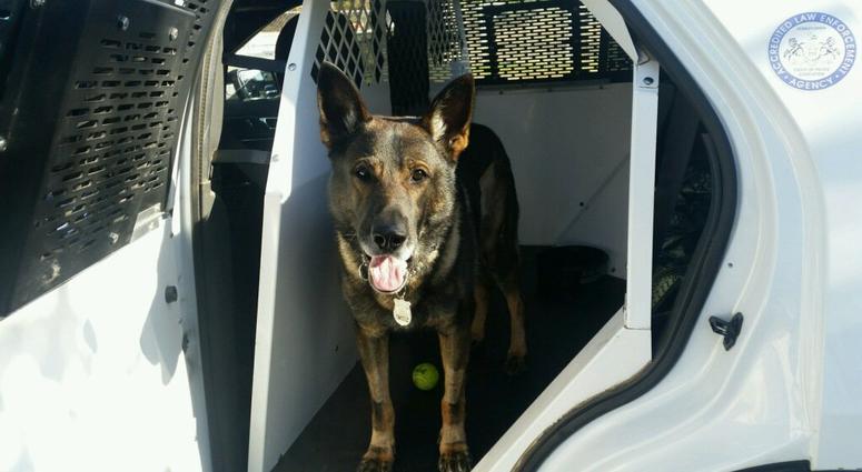 Philadelphia police dog Kane