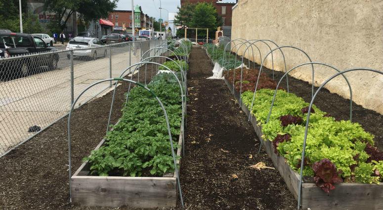 With farm bill, city farmers get big boost from Harrisburg | KYW