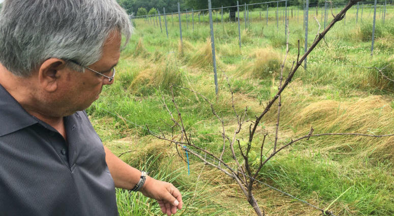 Dominic Dollose had big plans for a four-acre vineyard on his farm near Perkiomonville.