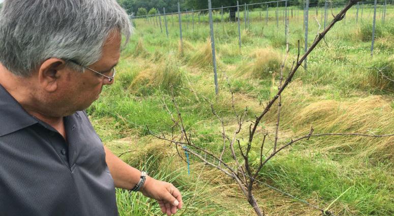 Dominic Dollose had big plans for a four-acre vineyard on his farm near Perkiomonville.