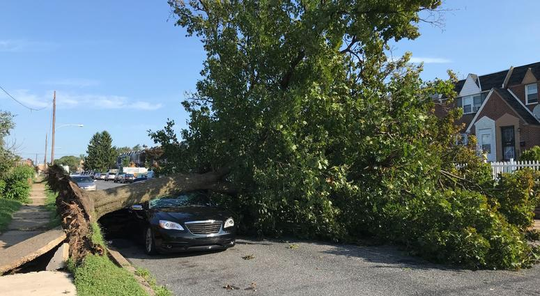 On Hellerman Street near Summerdale Avenue in the Oxford Circle section of Northeast Philly, a huge tree fell onto a single car.