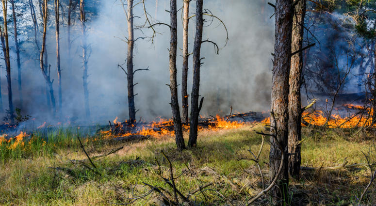 A pair of assembly committees listened to people discuss their plans to better protect the Pinelands from the kind of disastrous fires that are happening out west.