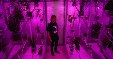 """A staff member poses for photographs inside the Netherlands installation """"Power Plant"""", a futuristic greenhouse that uses sunlight to generate both food and electricity during a preview for the London Design Biennale at Somerset House."""