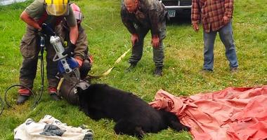 bear rescued