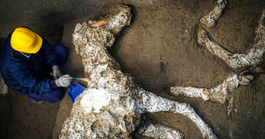 An archaeologist inspects the remains of a horse skeleton in the Pompeii archaeological site, Italy, Sunday, Dec. 23, 2018.