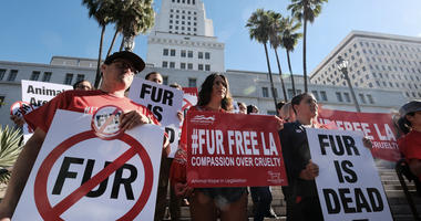 In this file photo, protesters with the People for the Ethical Treatment of Animals (PETA) hold signs to ban fur in Los Angeles prior to a news conference at Los Angeles City.
